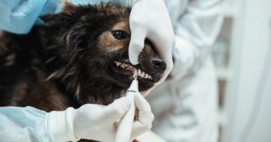 Ультразвуковая очистка зубов