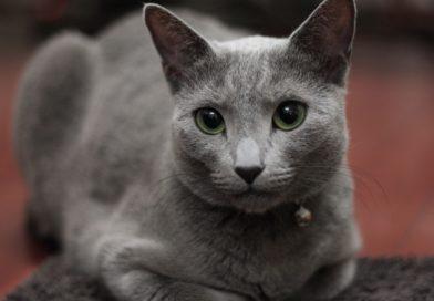 Грыжа у кошек, признаки ее появления